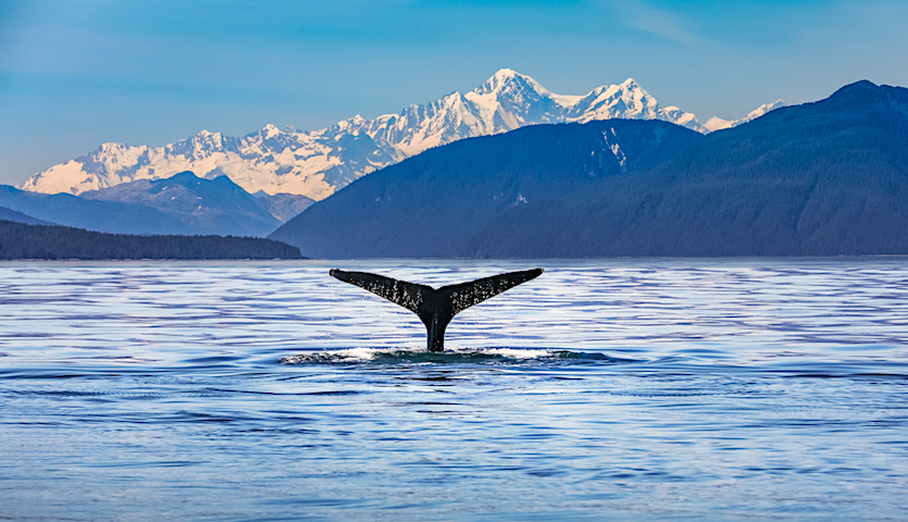 Whale Tail in Anchorage Alaska with Mountains