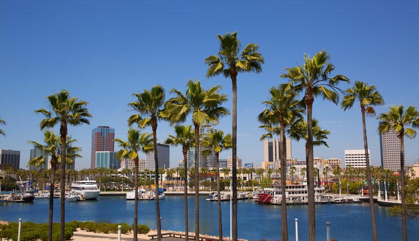palm trees at marina in long beach california