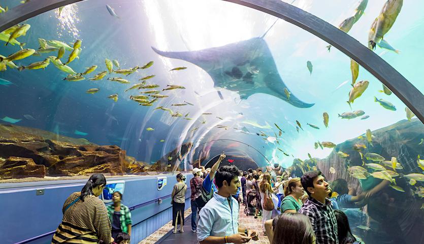 People at the Atlanta Aquarium in Georgia