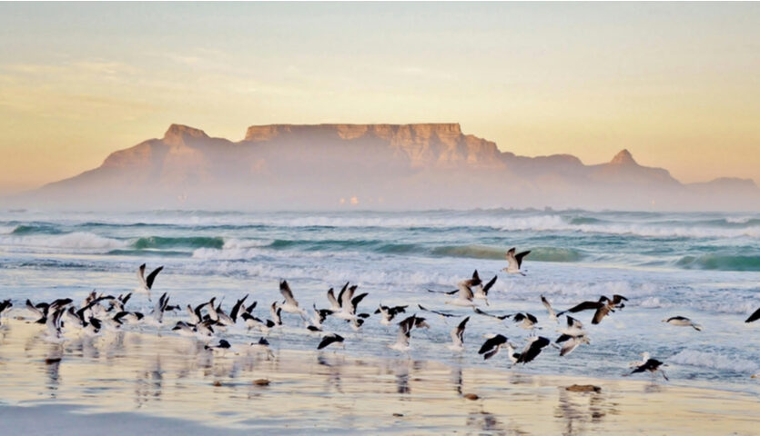 birds flying at beach with table mountain in background Cape Town, South Africa