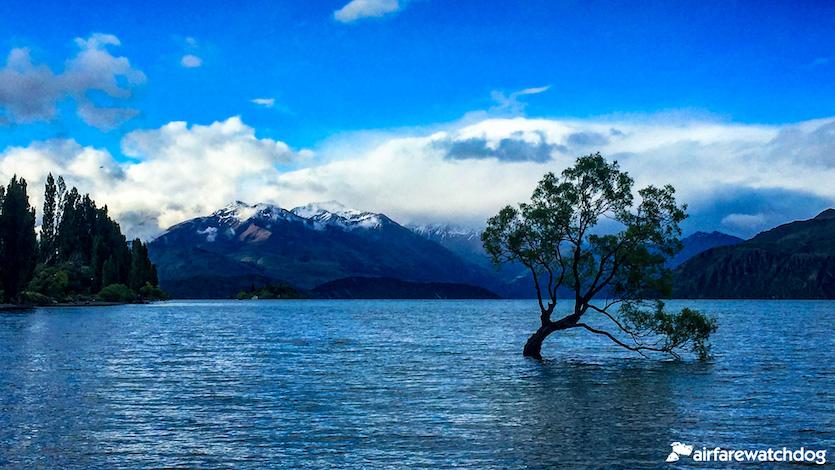 South Island of New Zealand Wanaka Tree
